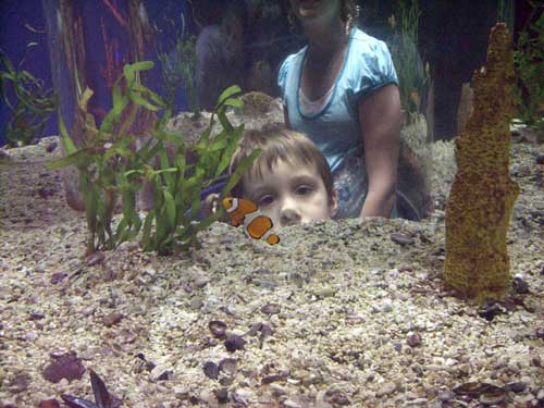 Nemo is found at last.