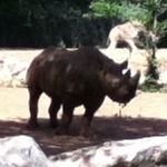 April 2012 - The Zoo